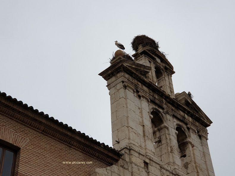 Alcala de Henares Spain by piccavey Storks