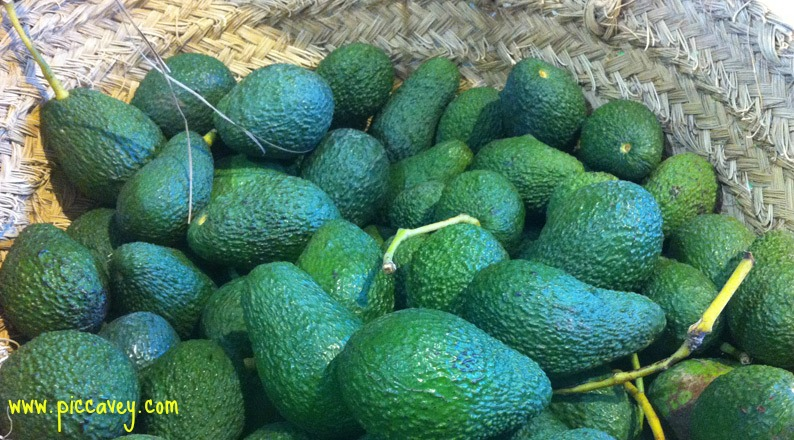 Avocado in Spain Spanish Fruit