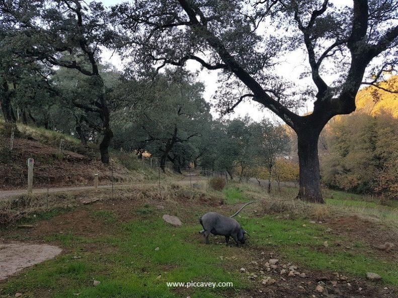 Dehesa Jabugo Spanish Ham Huelva-