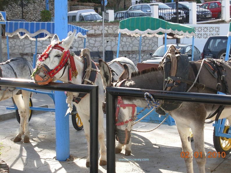 Donkeys in Mijas