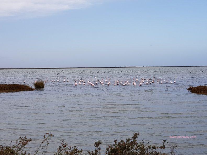 Flamingos Doñana Huelva by piccavey