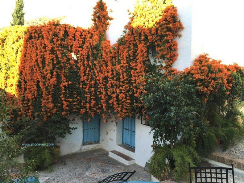 Flowers in Frigiliana Spain