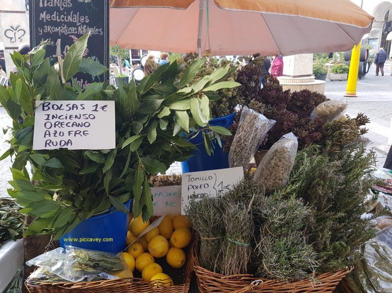 Fresh herbs jerez rosemary thyme