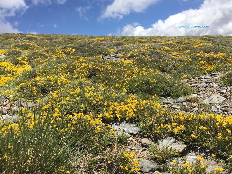Ginesta Sierra Nevada Sustainable Spain