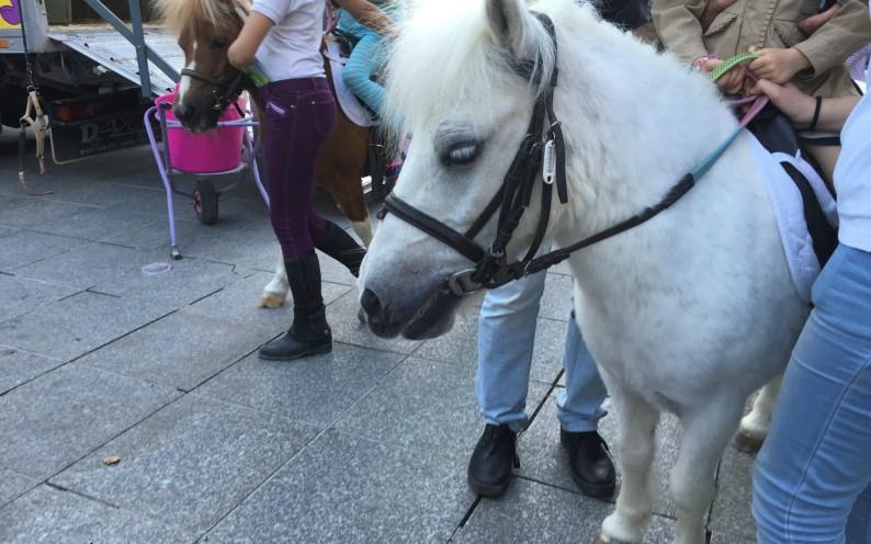 Granada shopping Ponies Bib Rambla