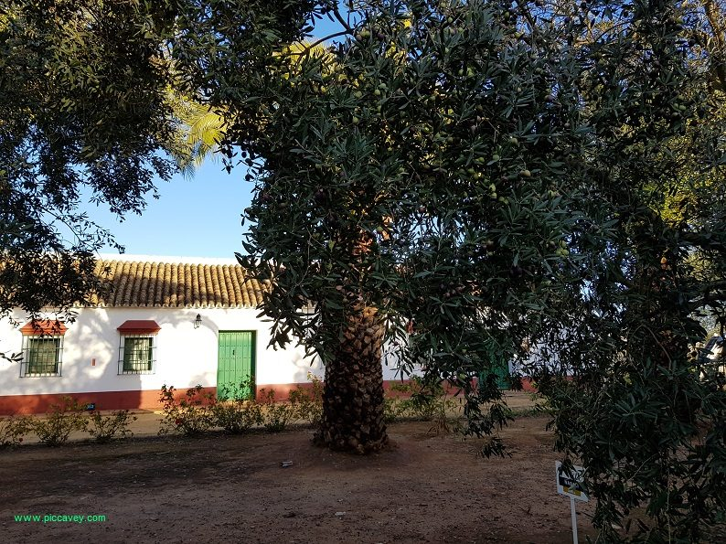 Hacienda Guzman Seville Olive Oi in Spain