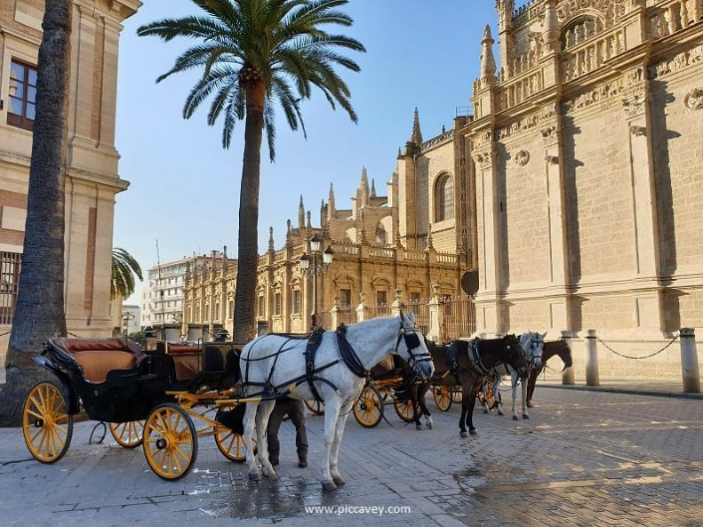 Horses Seville Cathedral
