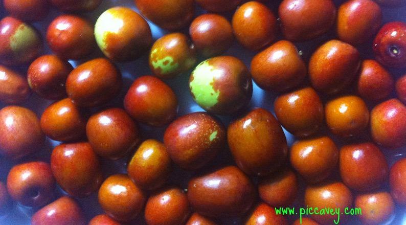 Jujube berries Azofaifa