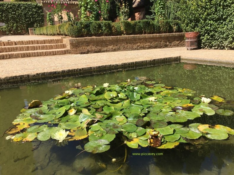 Lilypads in Alhambra Partal