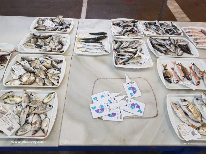 Lonja El Campello Fish Auction