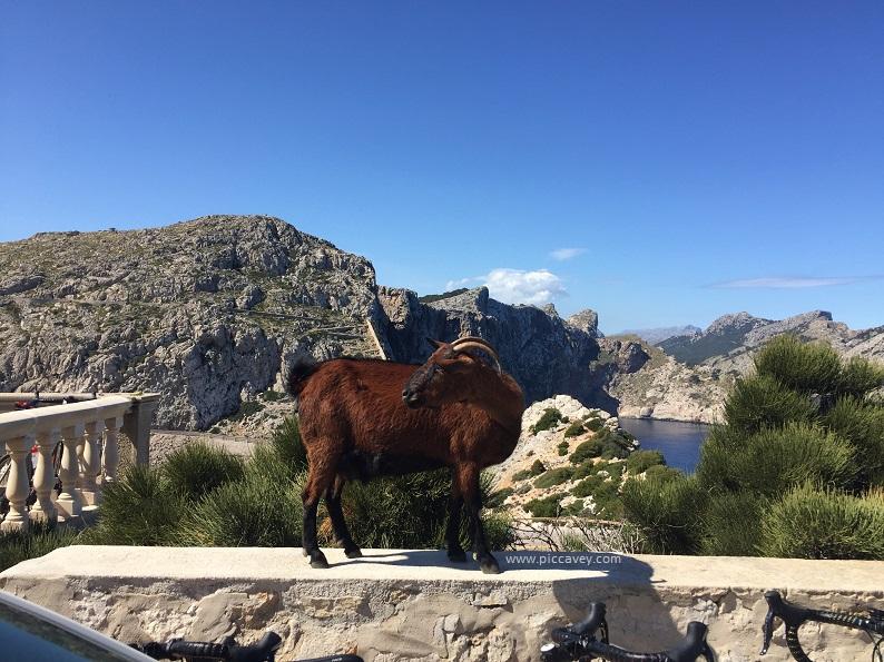 Majorca Goat Cap Formentor