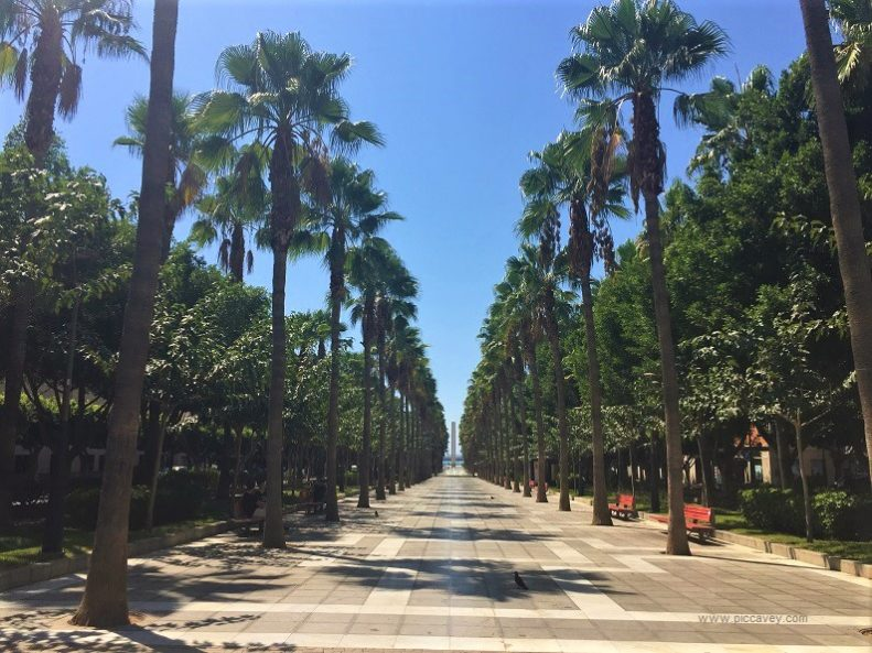 Palm Trees In Almeria Spain
