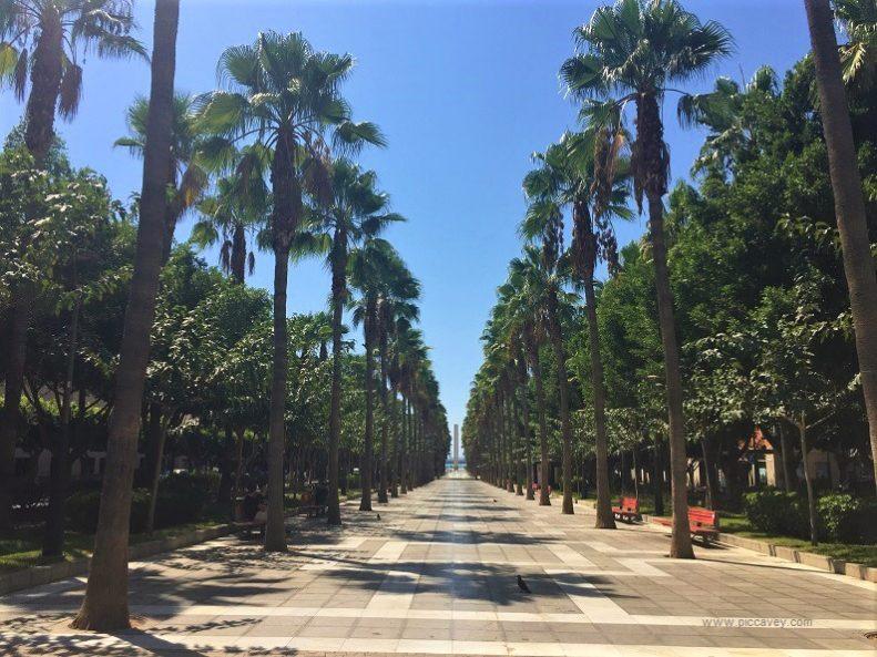 Palm Trees In Almeria Spain