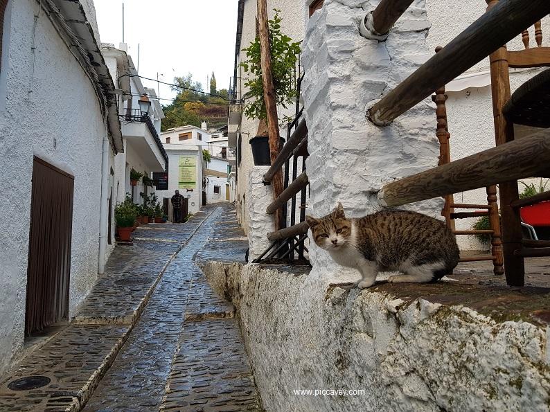 Pampaneira Alpujarra Cat