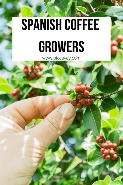 Spanish Coffee Growers Canary Islands