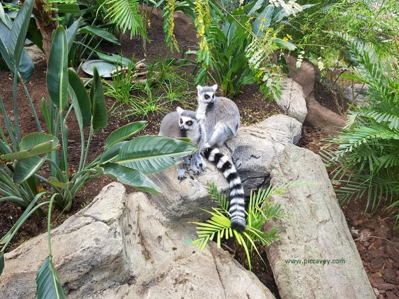 Science Museum Granada with kids Lemurs in Biodome