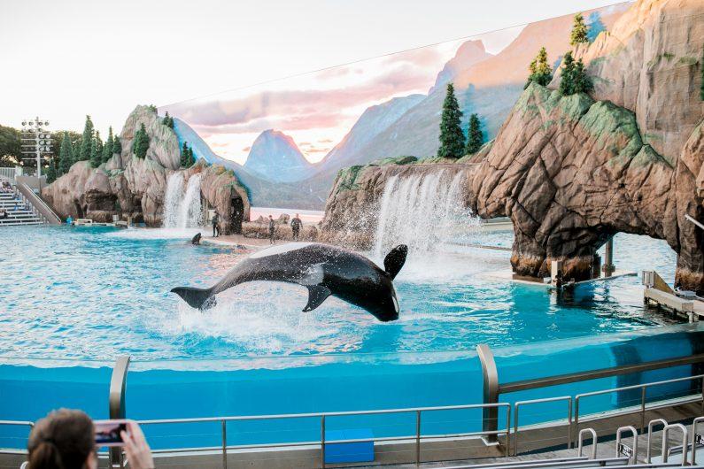 Seaworld Orlando US attraction parks