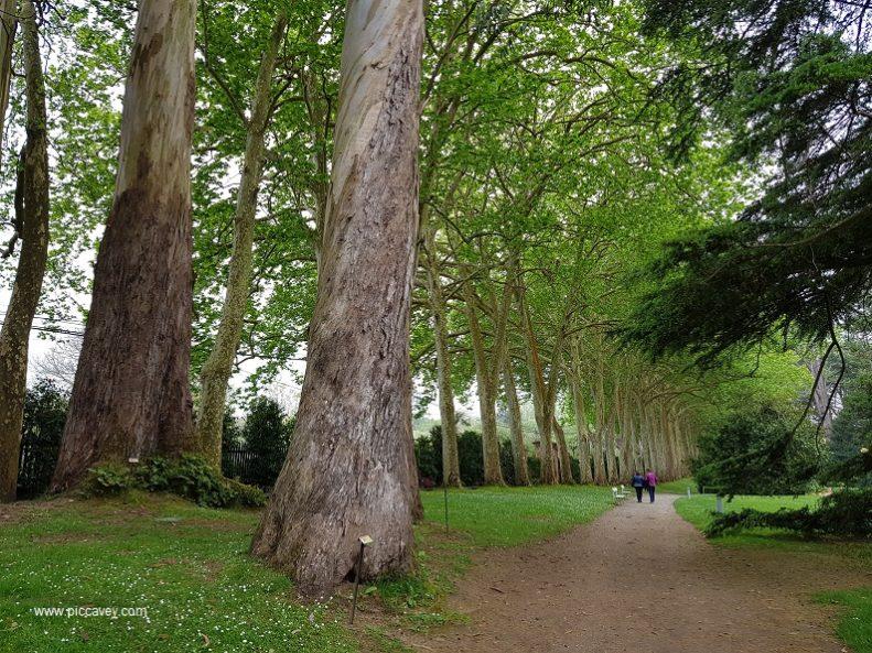 Trees at Botanic Garden in Gijon Asturias Spain