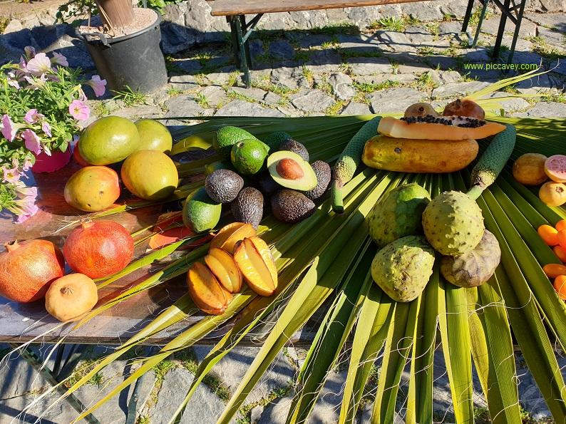 Tropical Fruit grown in Granada Spain