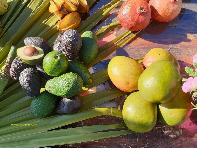 Tropical fruit production in South Spain