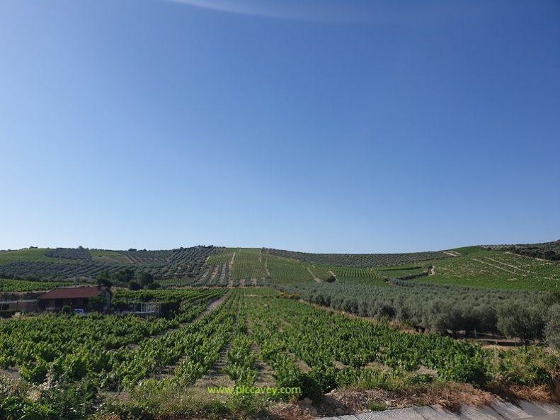 Wine Region Montilla Moriles in Cordoba